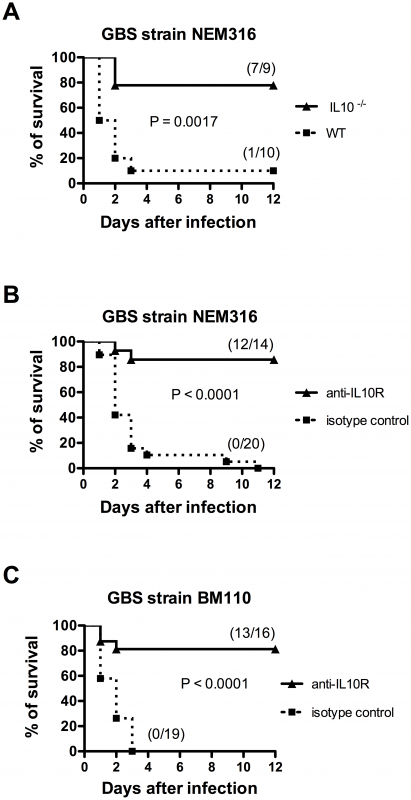 Impairment of IL-10 signaling confers protection to newborn mice against GBS infection.
