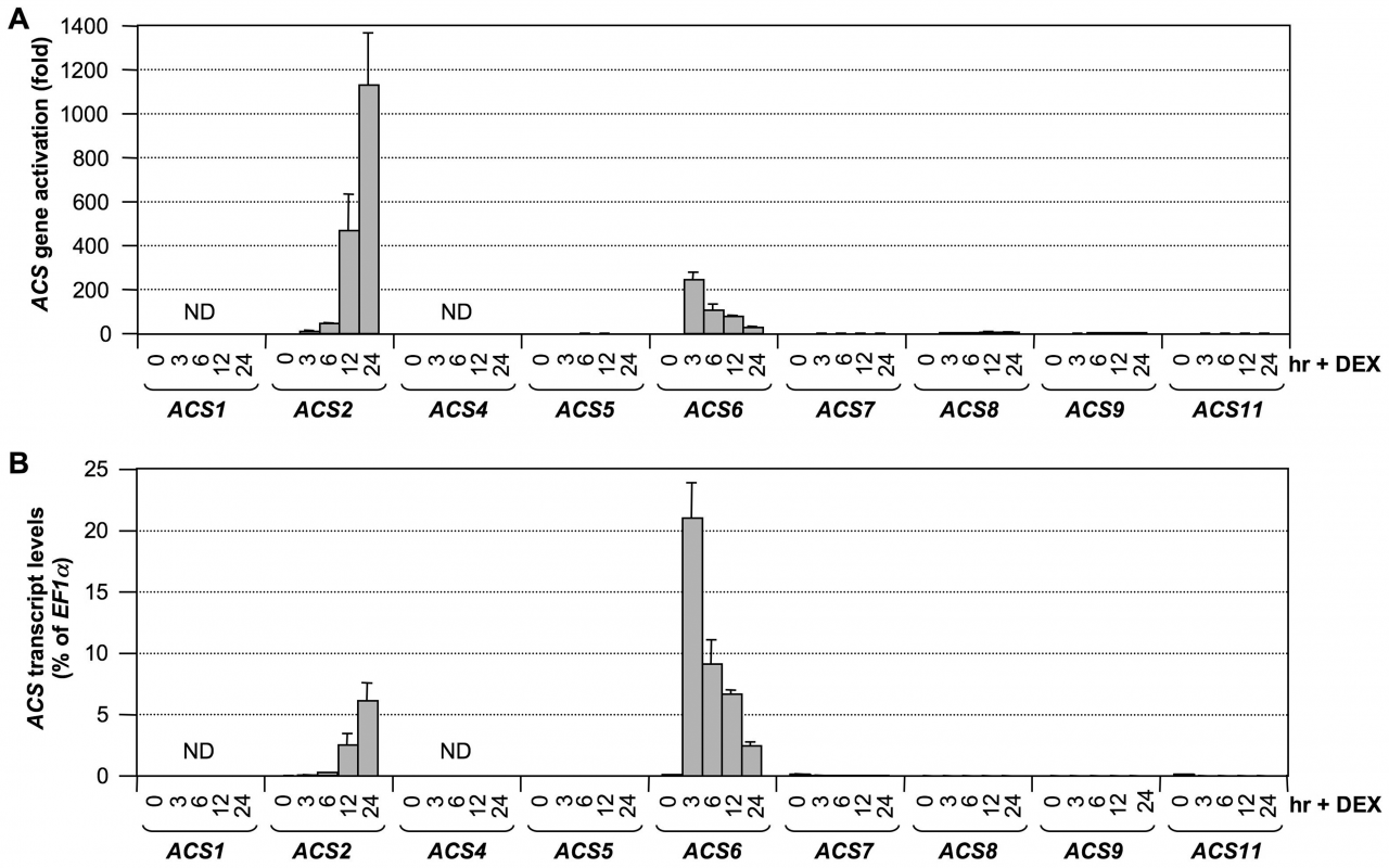 Activation of <i>ACS</i> gene expression after MPK3/MPK6 activation in the gain-of-function <i>DD</i> Arabidopsis seedlings.