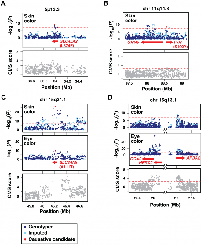 Imputation, fine-mapping, and selective signature scores for skin and eye color loci.