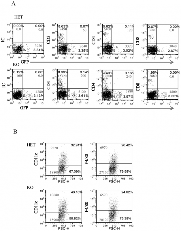 The infiltration of immune cells into the <i>F. nucleatum</i> challenged chambers is NCR1-independent.