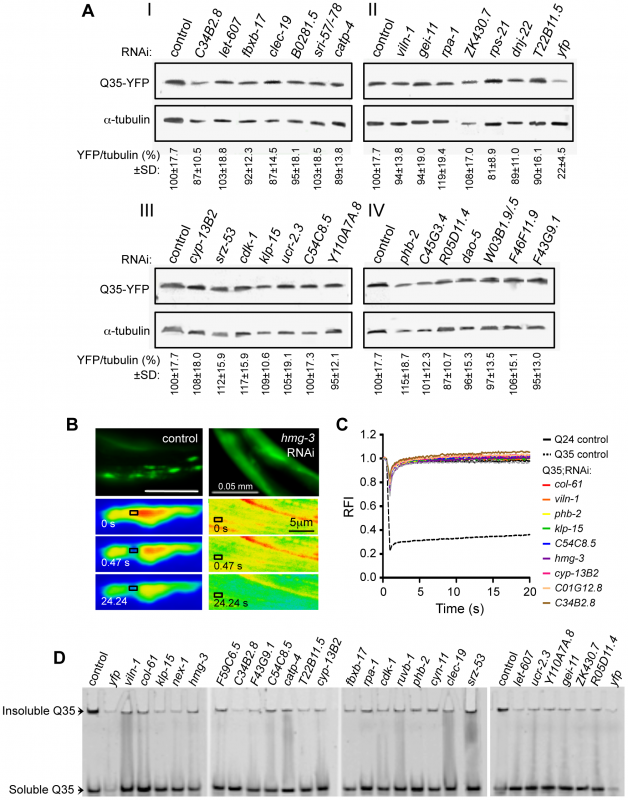 Suppressors of aggregation maintain polyQ in a diffuse state without affecting expression levels.