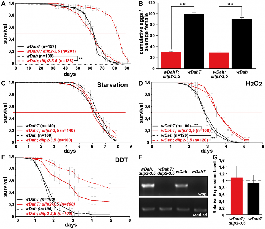 <i>Wolbachia</i>-dependent lifespan extension of <i>dilp2–3,5</i> mutants is correlated with xenobiotic resistance.