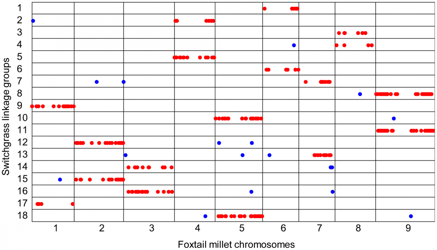 Sequence alignment of SNPs in switchgrass paternal linkage groups to the foxtail millet genome.