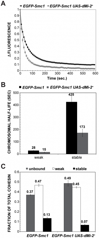 dMi-2 decreases the stability and extent of cohesin chromosome binding.