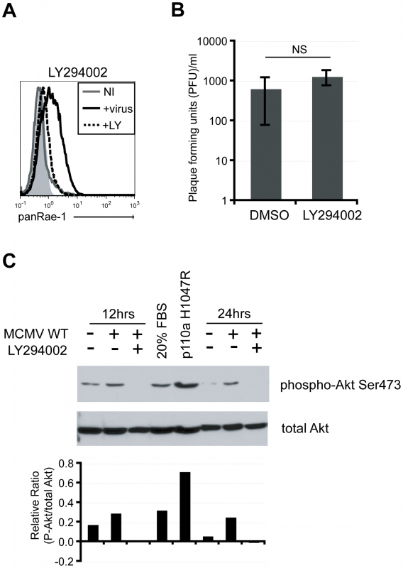 PI3K pathway is required for RAE-1 induction in MCMV-infected cells through the activation of Akt.