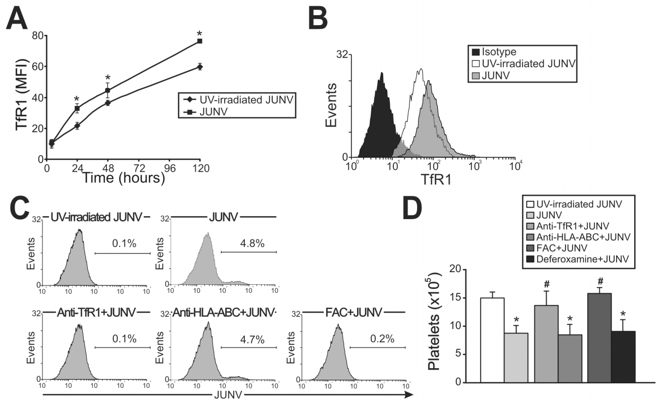 Role of TfR1 in JUNV infection and impaired platelet production.