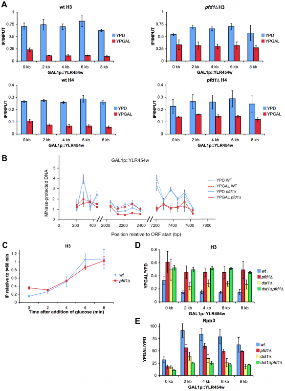 Histone dynamics during transcription elongation is impaired in <i>pfd1Δ</i>.