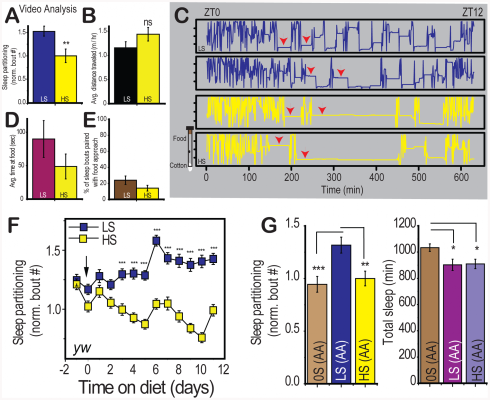 Characterization of diet-induced changes to sleep architecture.