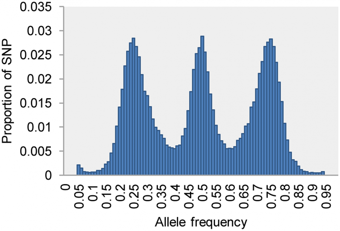 Allele frequency of 50,000 SNPs (call rate >0.8) in the full-sib F1 population (n=130) of upland tetraploid switchgrass, showing the classic signature of a cross between two heterozygous diploids.