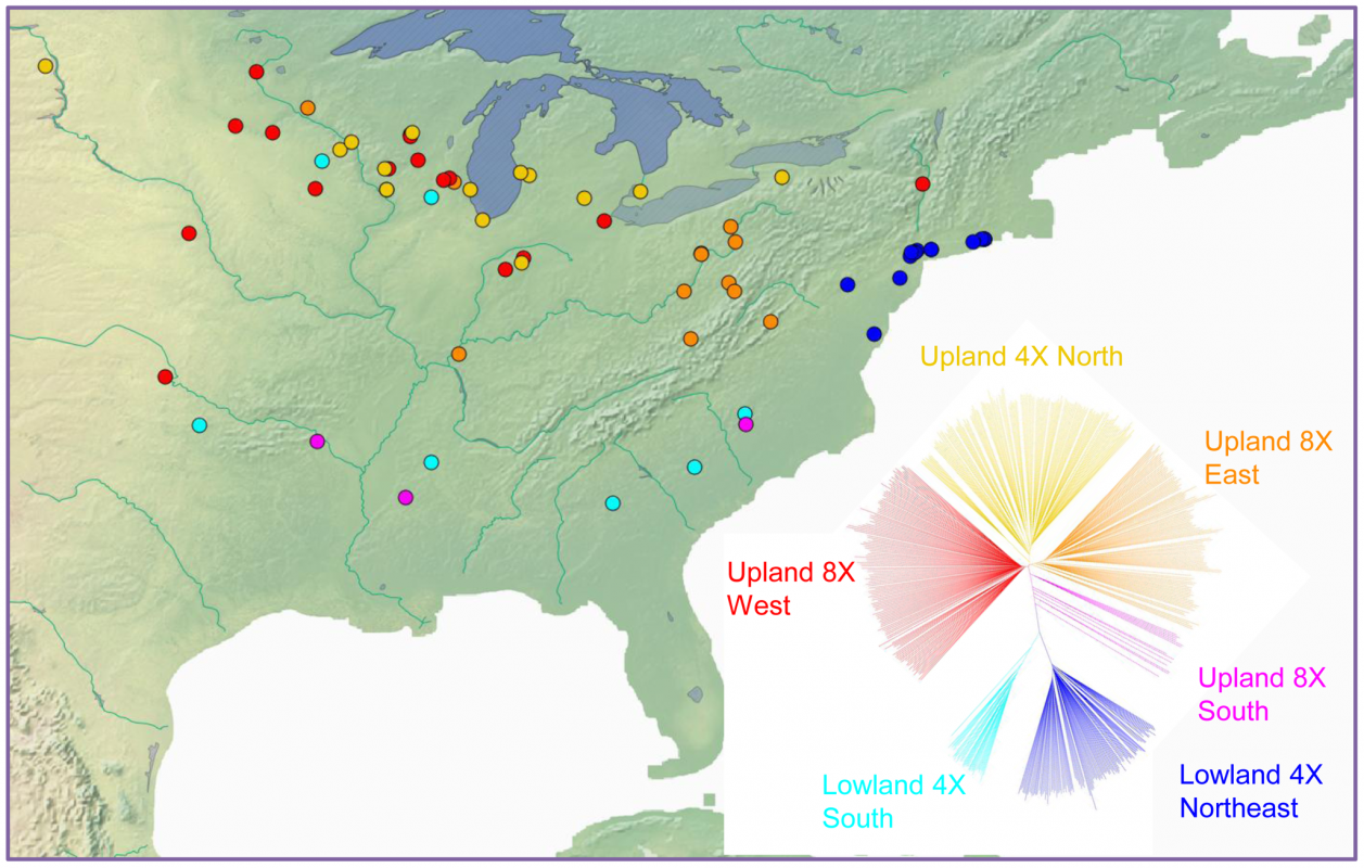 Geographic distribution and phylogenetic groups of switchgrass in the association panel.