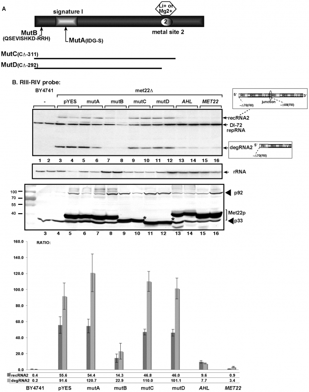 The nucleotidase function of Met22p is important for TBSV RNA recombination in yeast.
