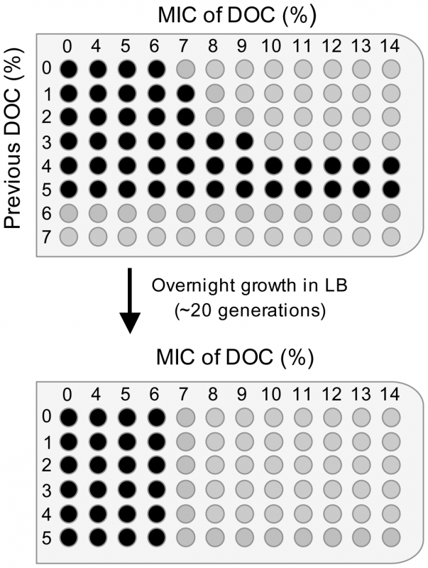 Minimal inhibitory concentrations (MICs) of sodium deoxycholate (DOC) for <i>Salmonella</i> cultures pre-exposed to various concentrations of DOC, and MICs for the same cultures after overnight growth in LB.