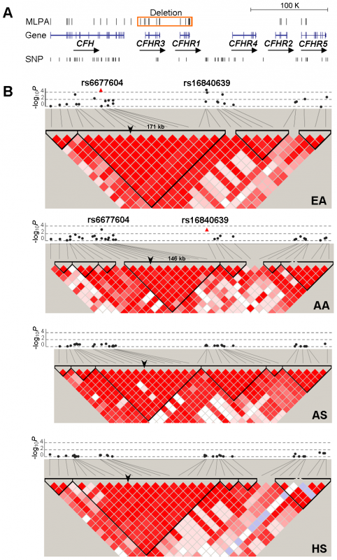 Allelic association of SNPs in the <i>CFH-CFHRs</i> region with SLE and their LD patterns.