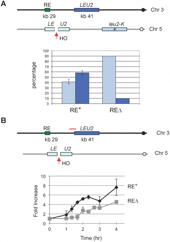 The Presence of RE Promotes DSB–Mediated Interchromosomal Gene Conversion and Accelerates Rad51 Synapse Formation.