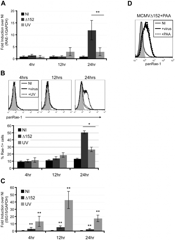 Viral early gene expression is necessary for the induction of RAE-1.