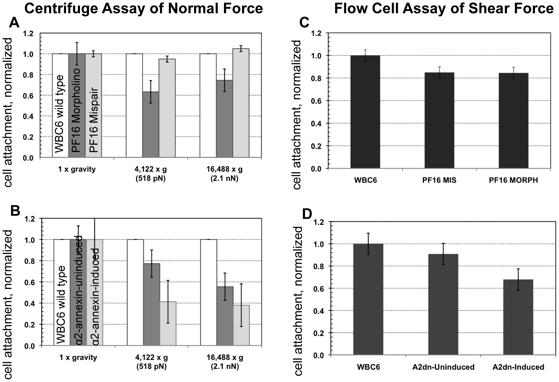 Trophozoites are able to maintain attachment when challenged with normal and shear forces, despite reduced flagellar beat frequency or diminished flagellar amplitude.