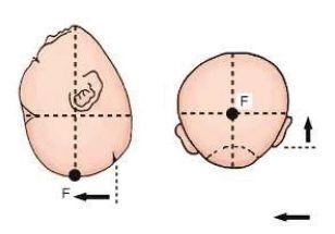 Flekční bod (převzato z Vacca et. al.)
