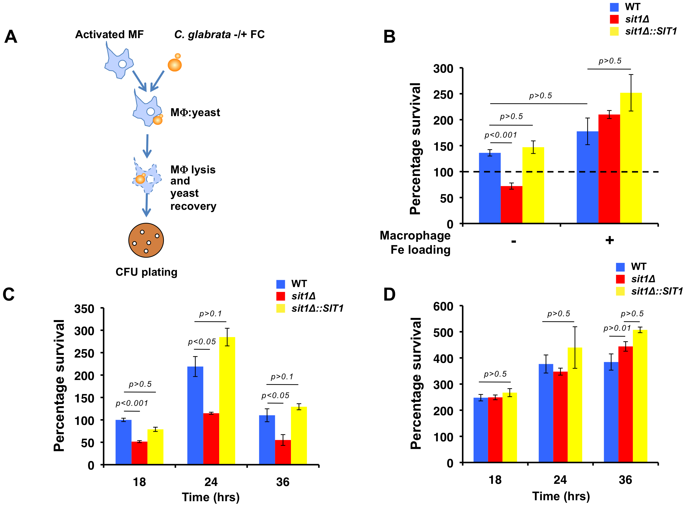 Macrophage Fe status determines the degree of Sit1 dependence for <i>C. glabrata</i> to survive macrophage killing.