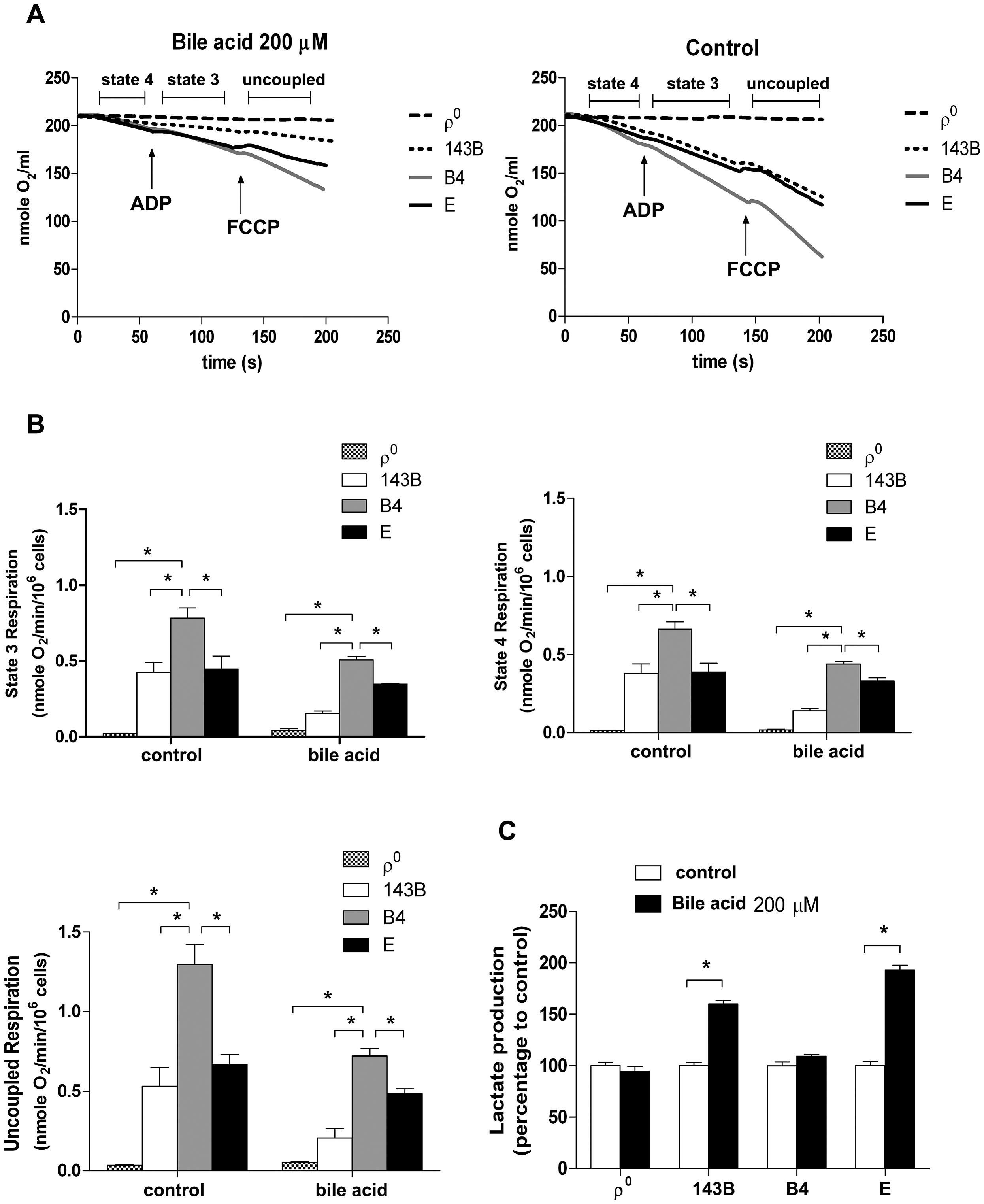 Effects of bile acid on OXPHOS and glycolysis in cybrid B4, cybrid E, parental 143B and ρ<sup>0</sup> cell.