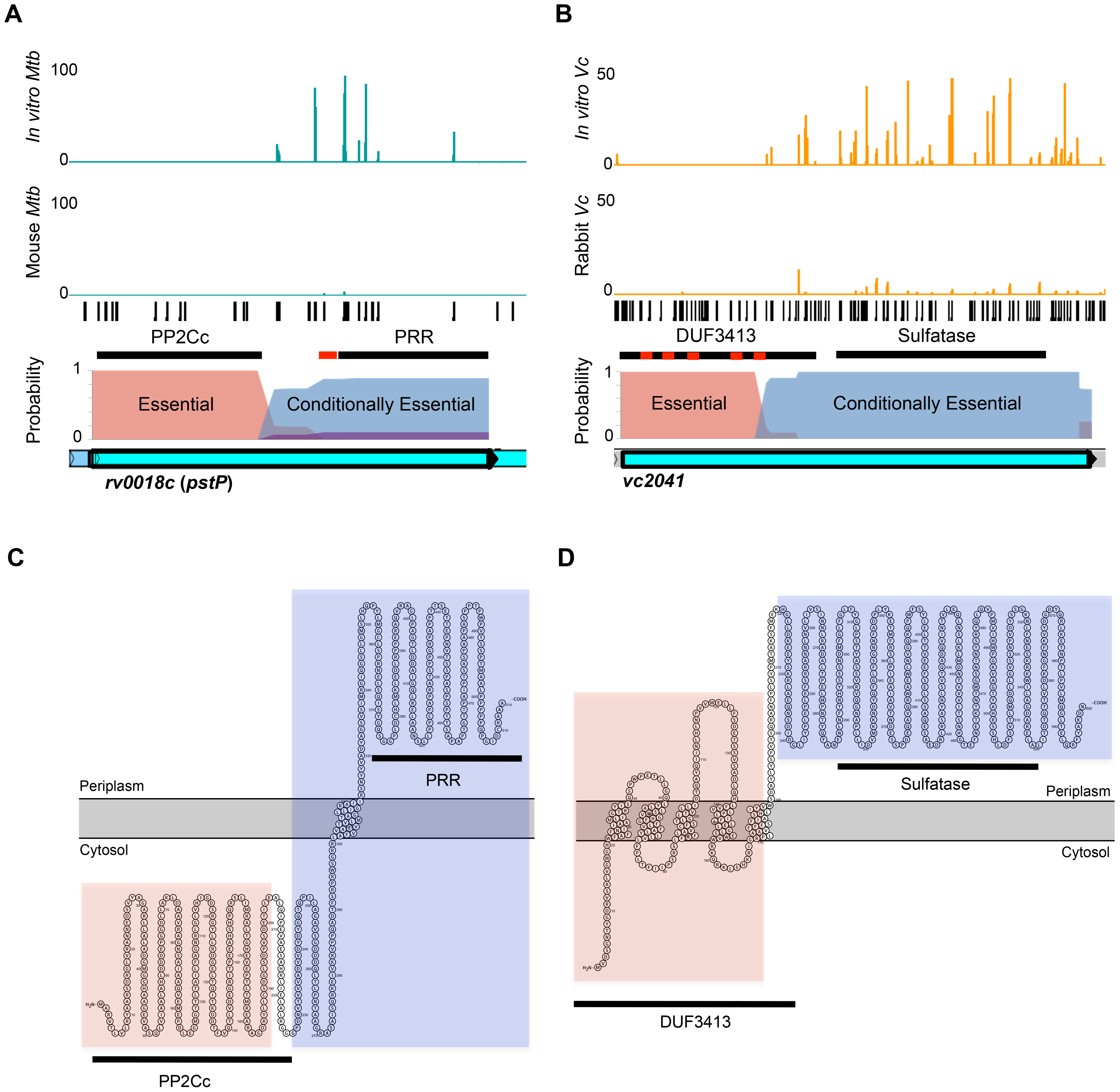 Con-ARTIST identifies conditionally essential regions required for host infection at sub-genic resolution.