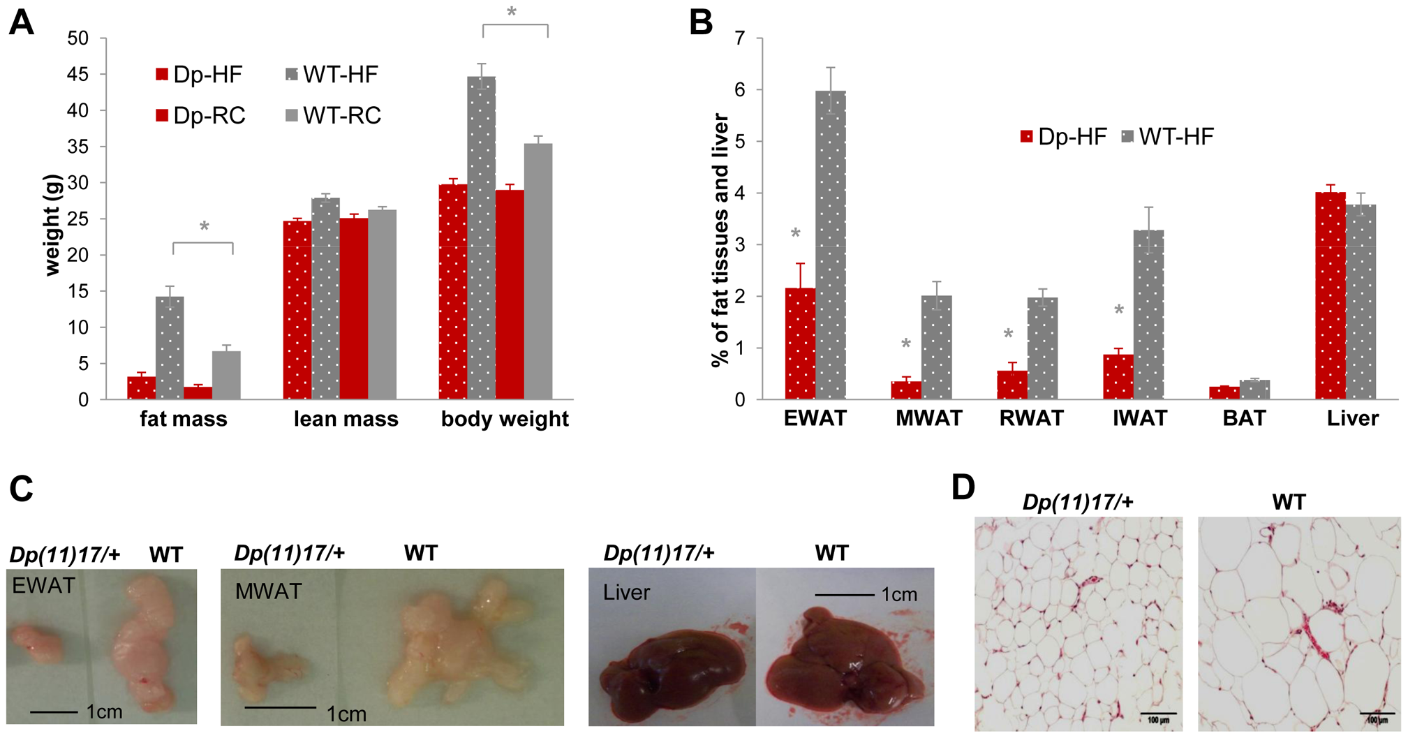 <i>Dp(11)17/+</i> mice (red) display resistance to diet-induced obesity compared to WT littermates (gray) after a high-fat diet (HF) feeding from 19 to 22 weeks.