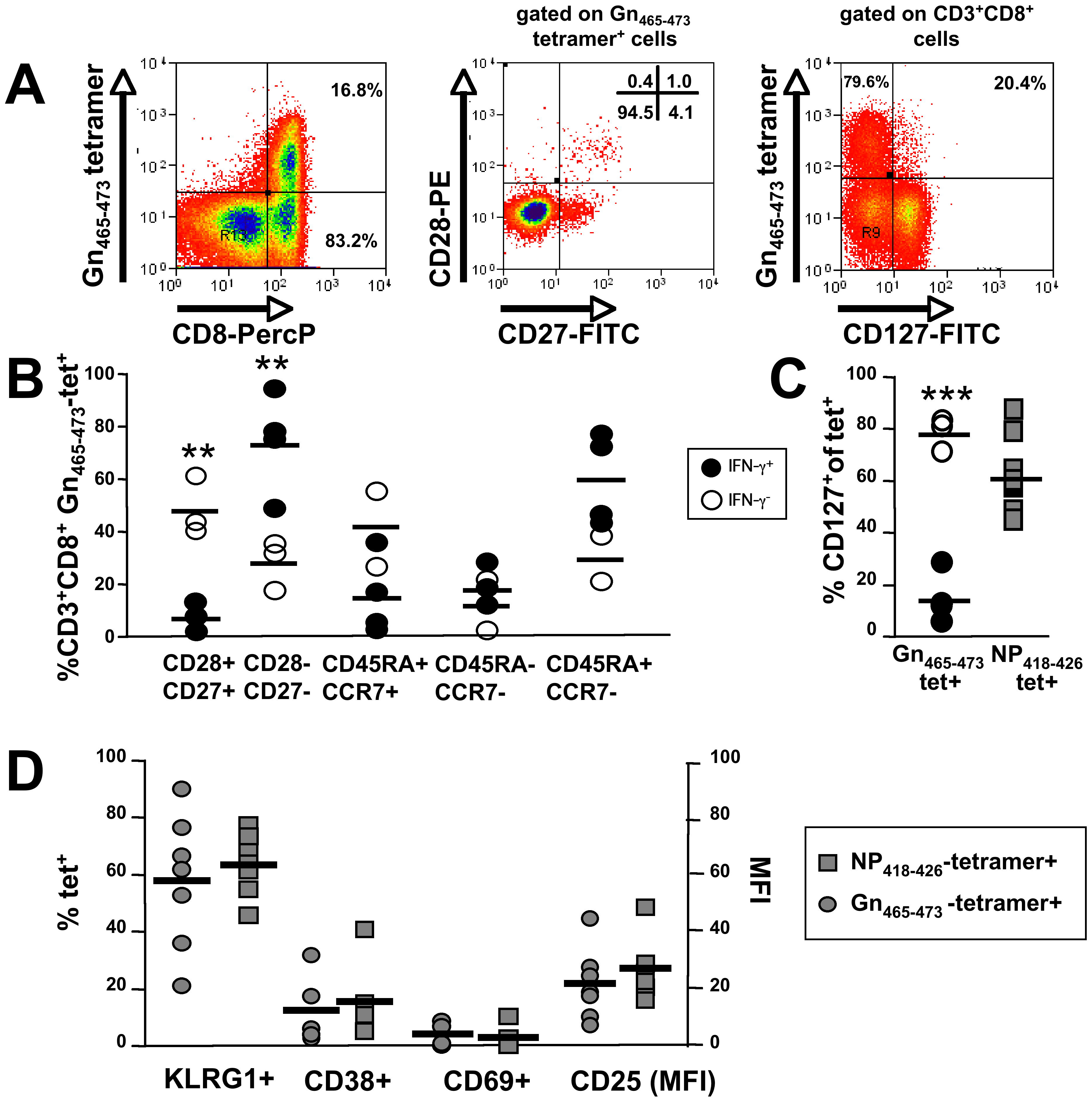 Phenotypic analysis of Gn<sub>465–473</sub>-specific subsets and comparison with (Influenza) NP<sub>418–426</sub>-specific CD8<sup>+</sup> T cells.