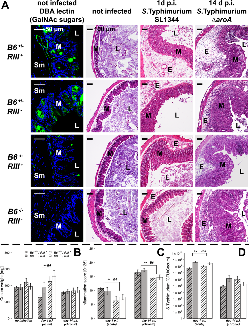 Tissue-specific expression of <i>B4galnt2</i> glycans influence susceptibility to <i>S</i>. Typhimurium-induced colitis.