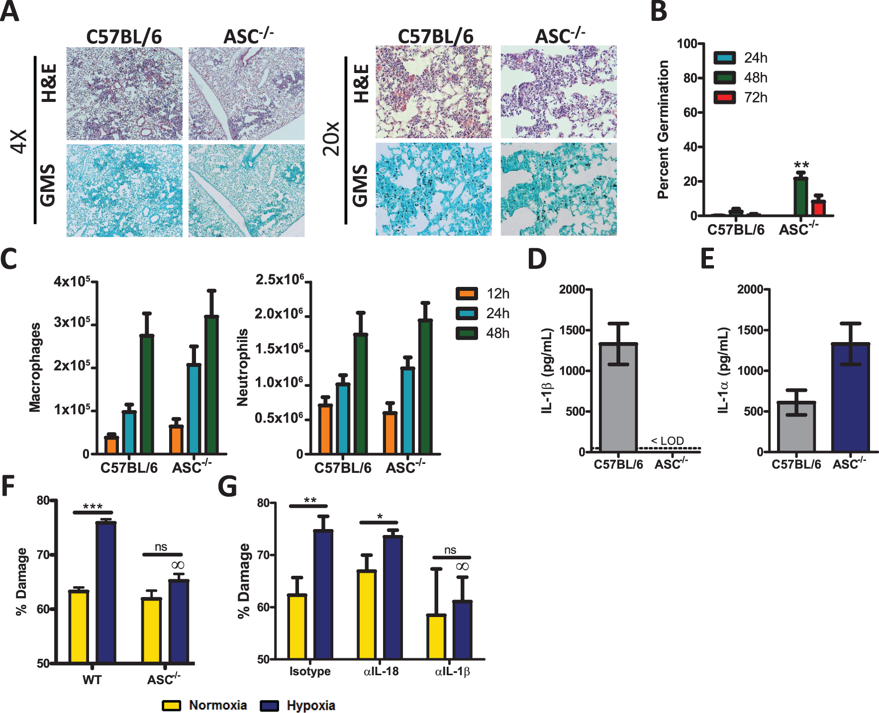 <i>Pycard</i>-deficient mice are mildly susceptible to <i>A. fumigatus</i> infection.