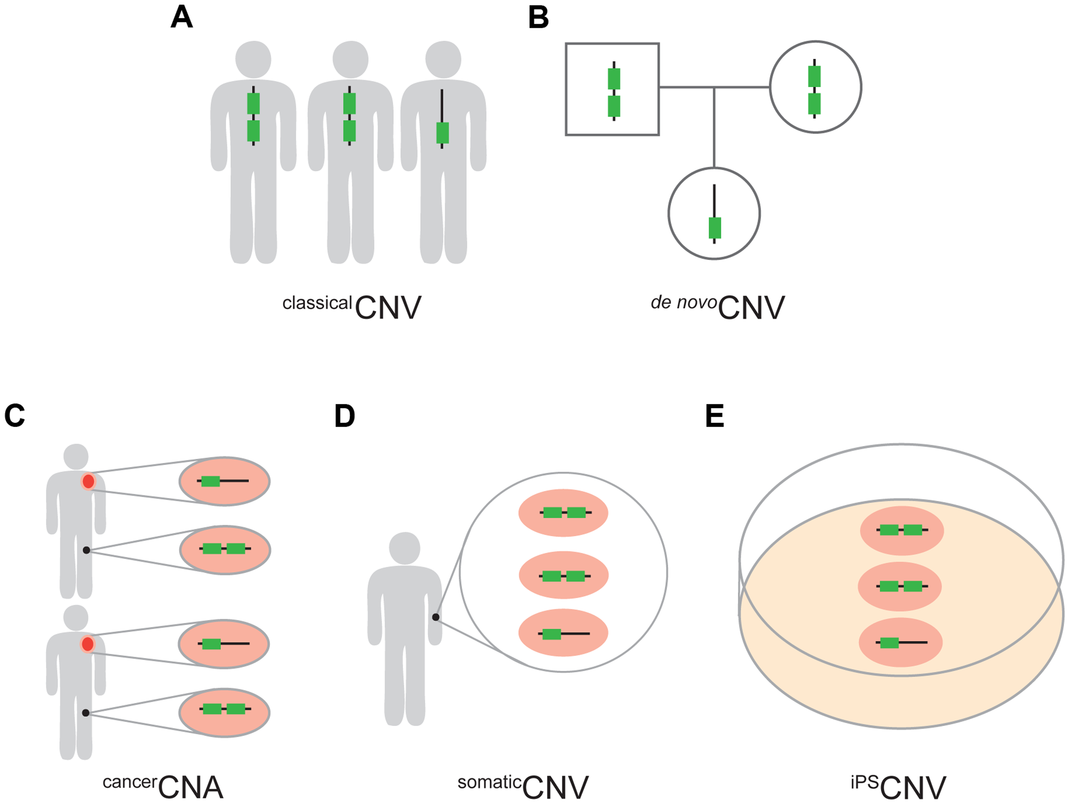 Five types of CNVs.