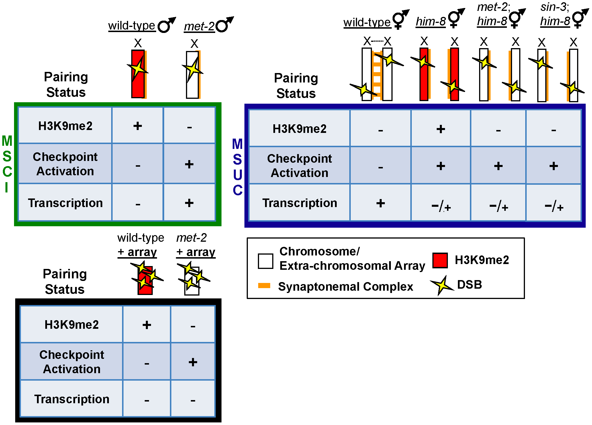 Repressive chromatin architecture blocks meiotic checkpoint signaling and facilitates MSCI on the single X chromosome but is dispensable for transcriptional inactivation on asynapsed chromosome pairs.