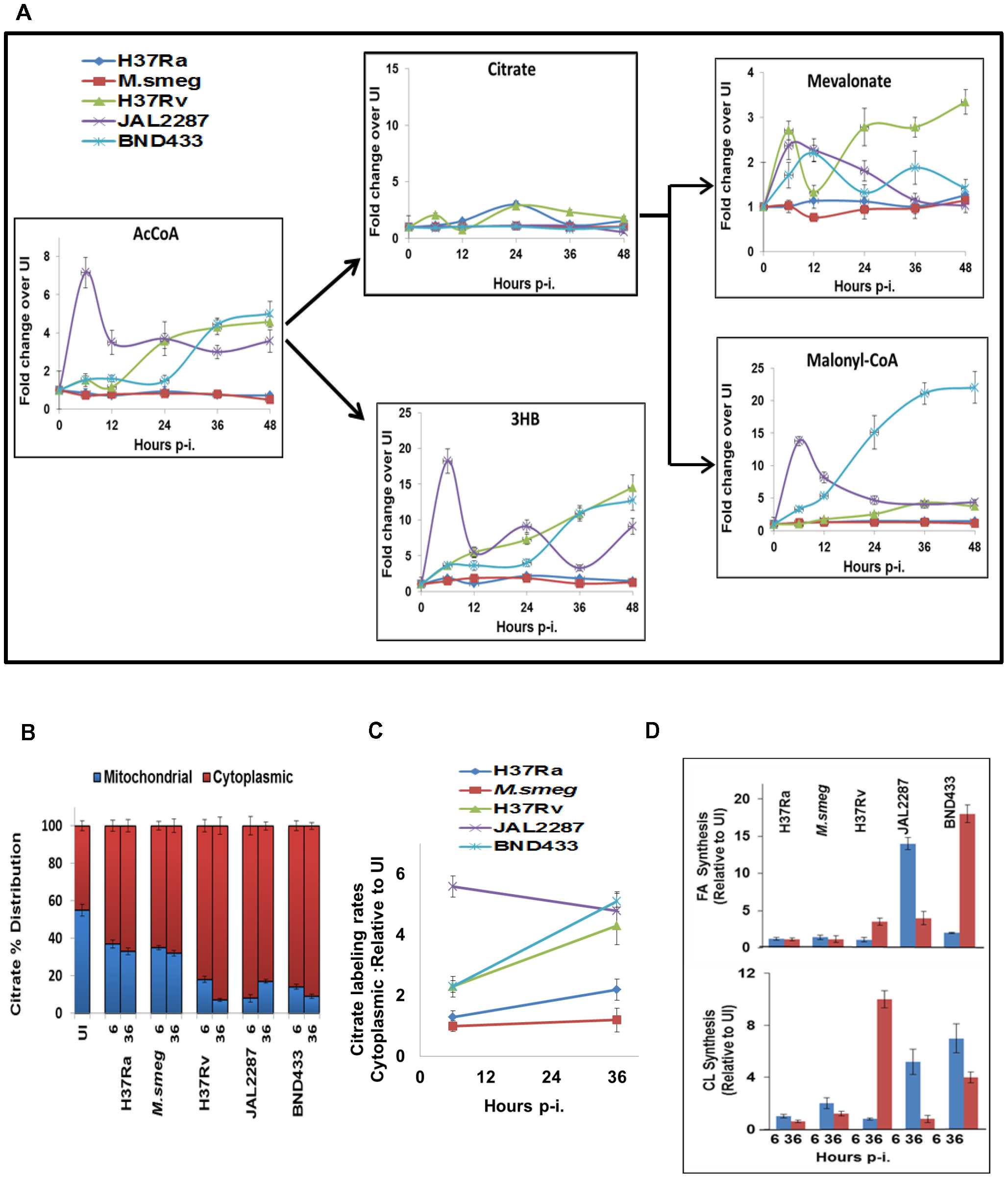 Citrate cataplerosis mediates <i>de novo</i> lipid synthesis in virMtb infected macrophages.