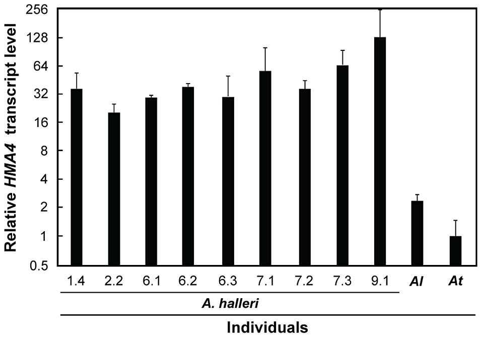 Leaf <i>HMA4</i> transcript levels in <i>A. halleri</i> individuals.