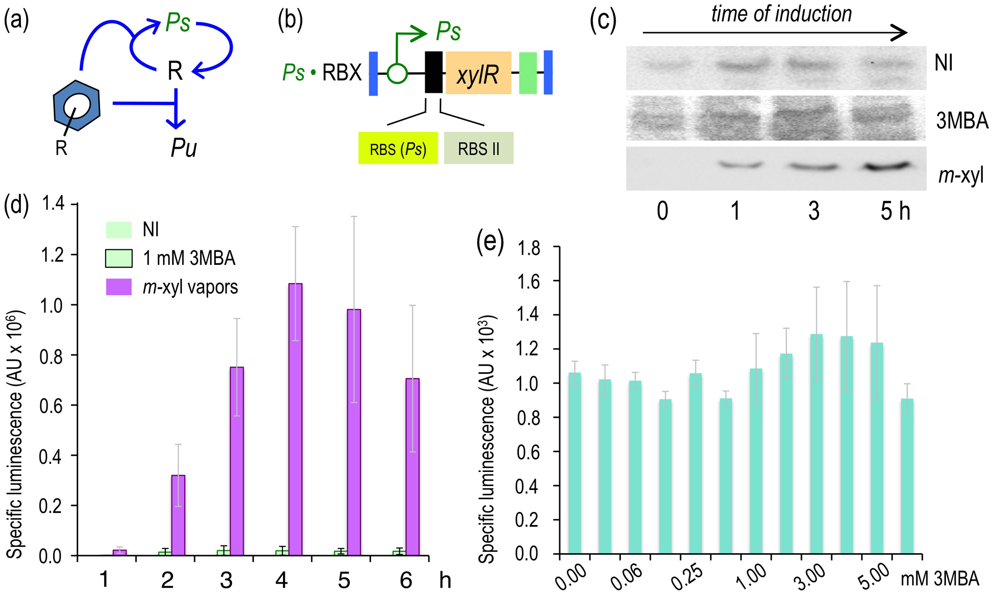 Induction of the XylR/<i>Pu</i> node in strains engineered with a <i>Ps</i>-PFL for <i>xylR</i> expression.