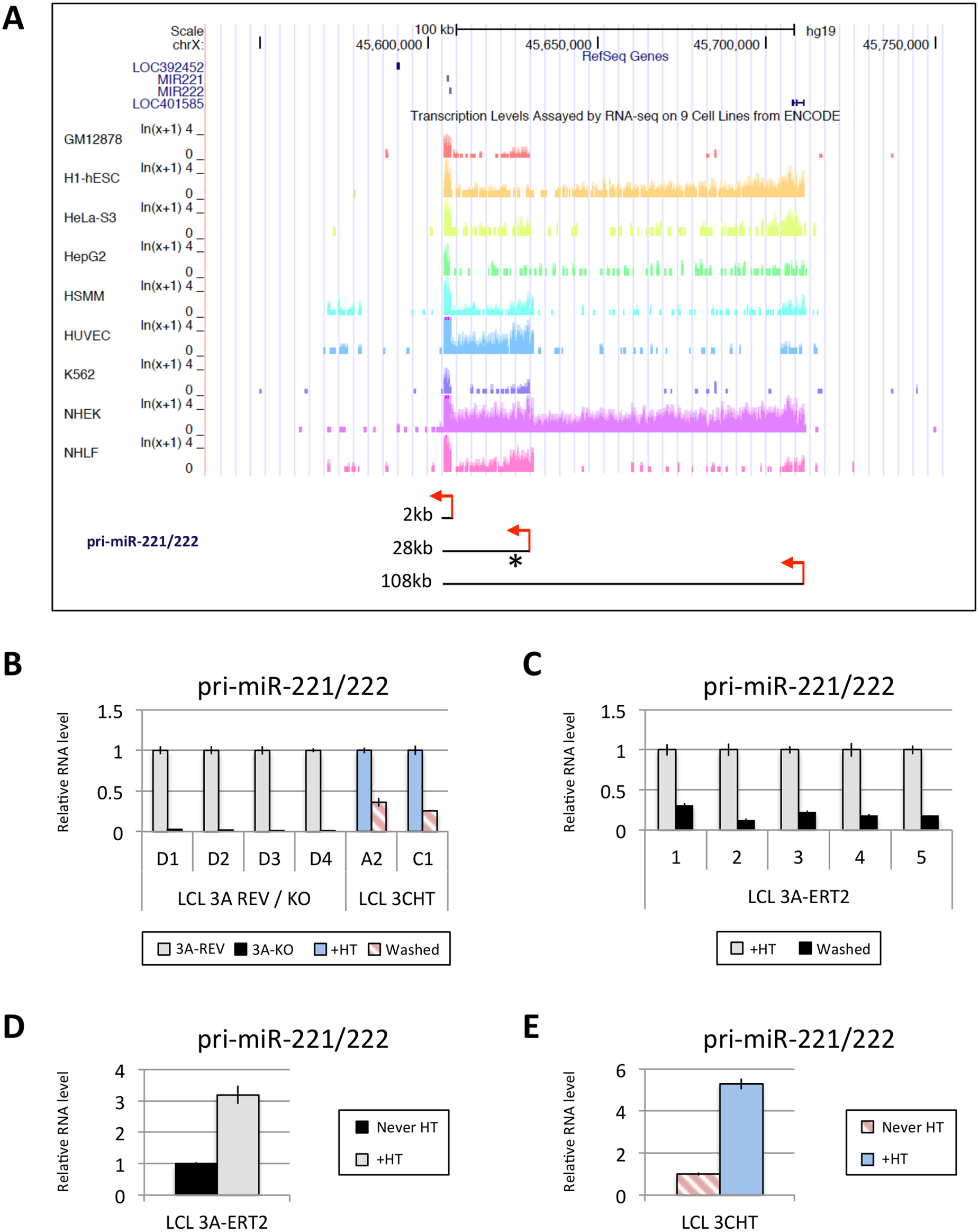 EBNA3A and EBNA3C up-regulate a pri-miR-221/222 of ~28kb.