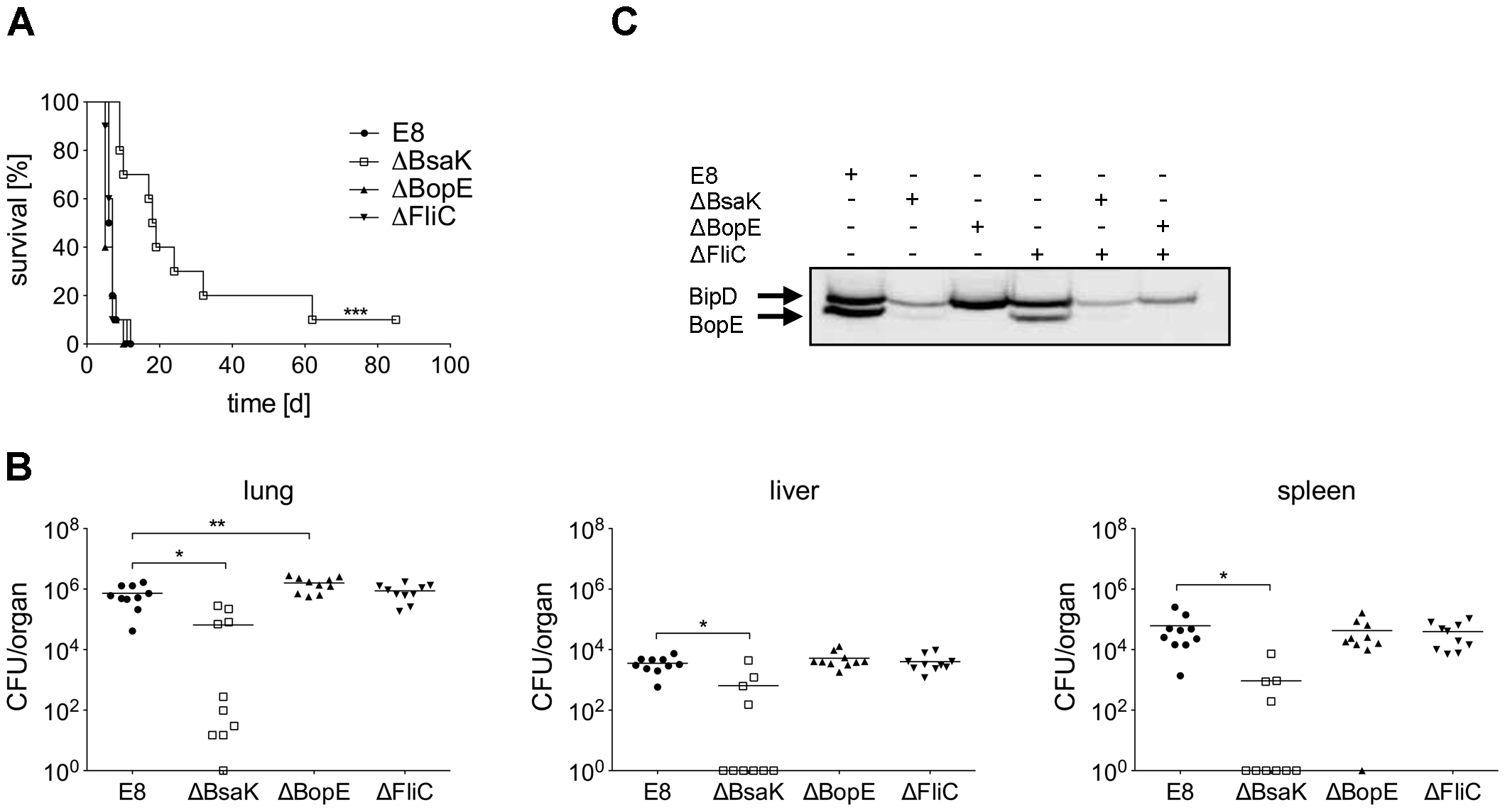 <i>B. pseudomallei</i> BsaK mutant is attenuated in a pulmonary mouse model.