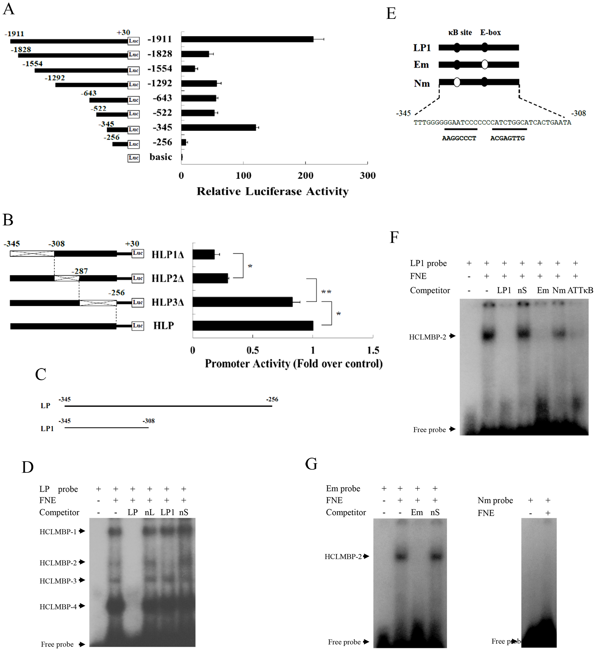 Identification of a transcription factor, HCLMBP-2, which may be a member of the NF-κB protein family.