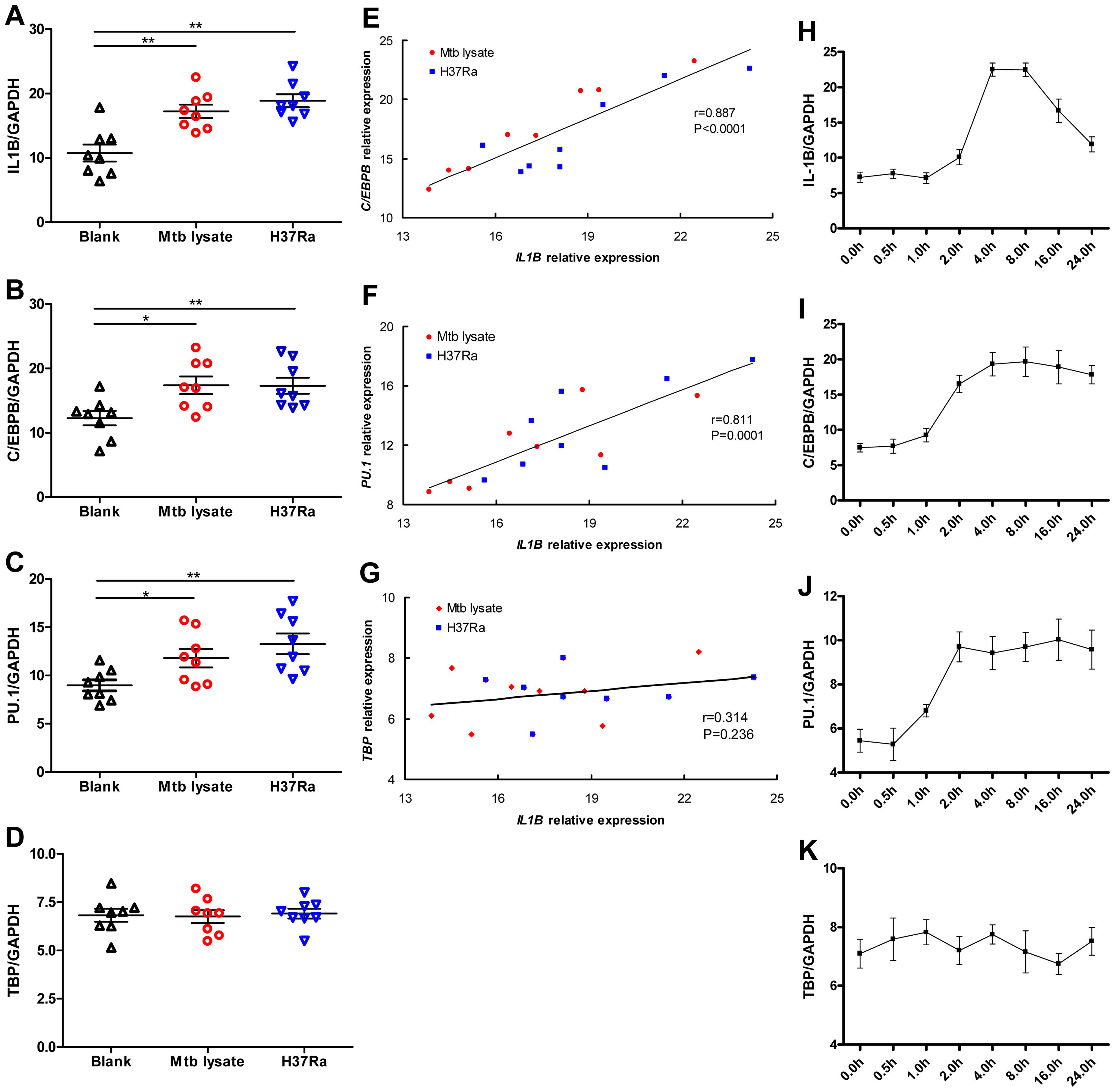 <i>C/EBPB</i> and <i>PU.1</i> expression induced by Mtb temporally correlates with <i>IL1B</i> expression.