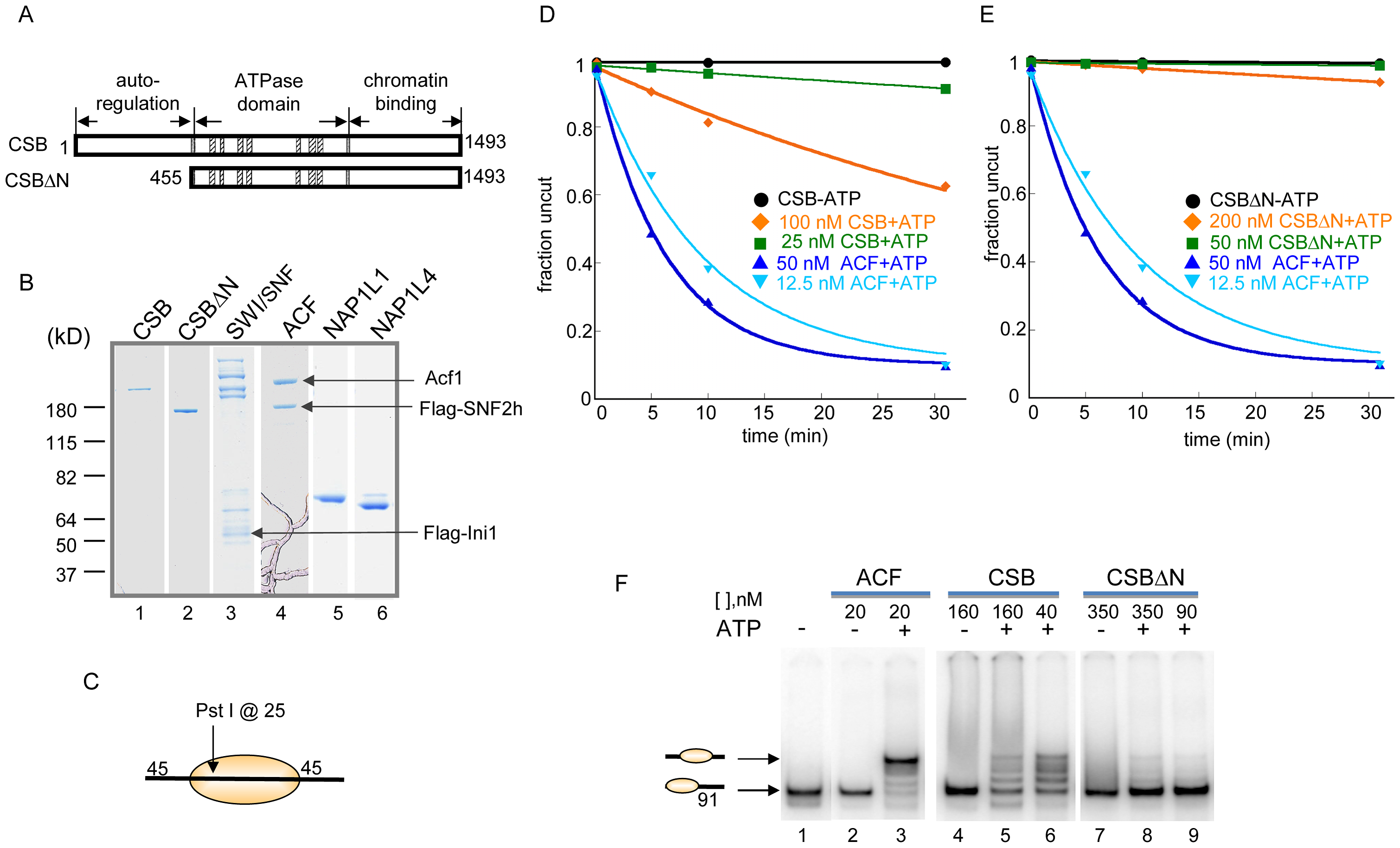 ATP–Dependent Chromatin Remodeling Activity of CSB.