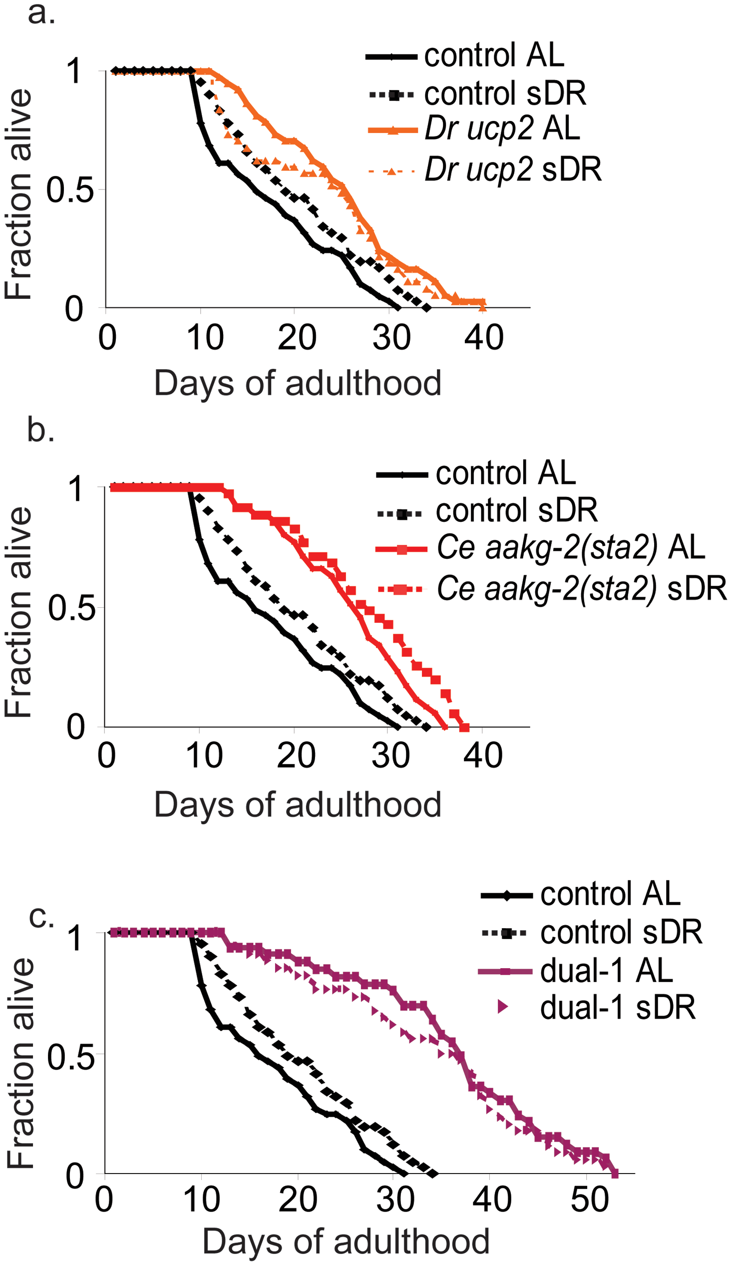 Dietary restriction does not increase lifespan of the <i>D. rerio ucp2</i>, <i>C. elegans aakg-2(sta2)</i>, or Dual-1 strains.