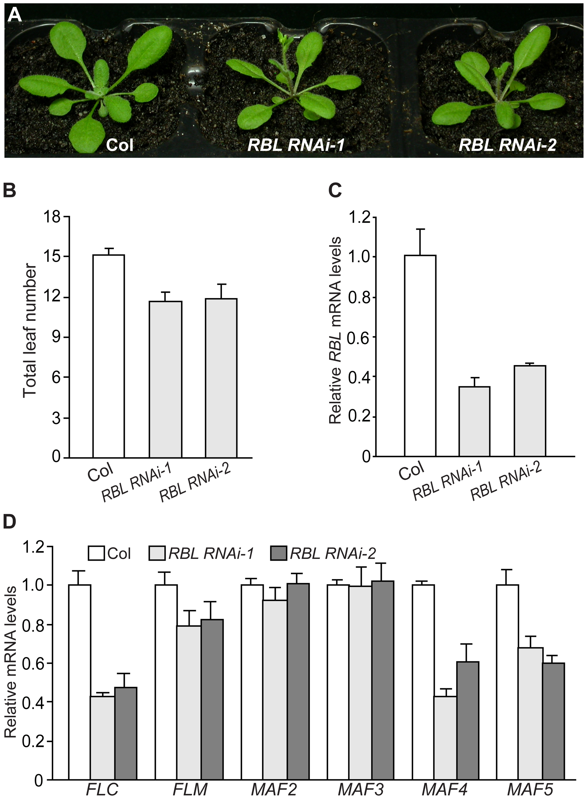 <i>RBL</i> Represses the Floral Transition in <i>Arabidopsis</i>.
