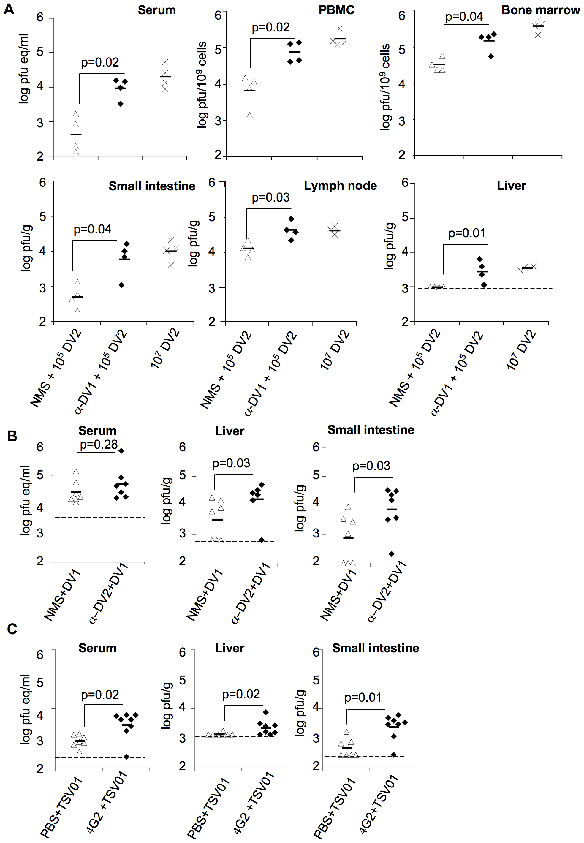 Enhancement by heterologous anti-DV antibodies increases systemic viral burden of mouse-adapted and clinical isolates of DV.