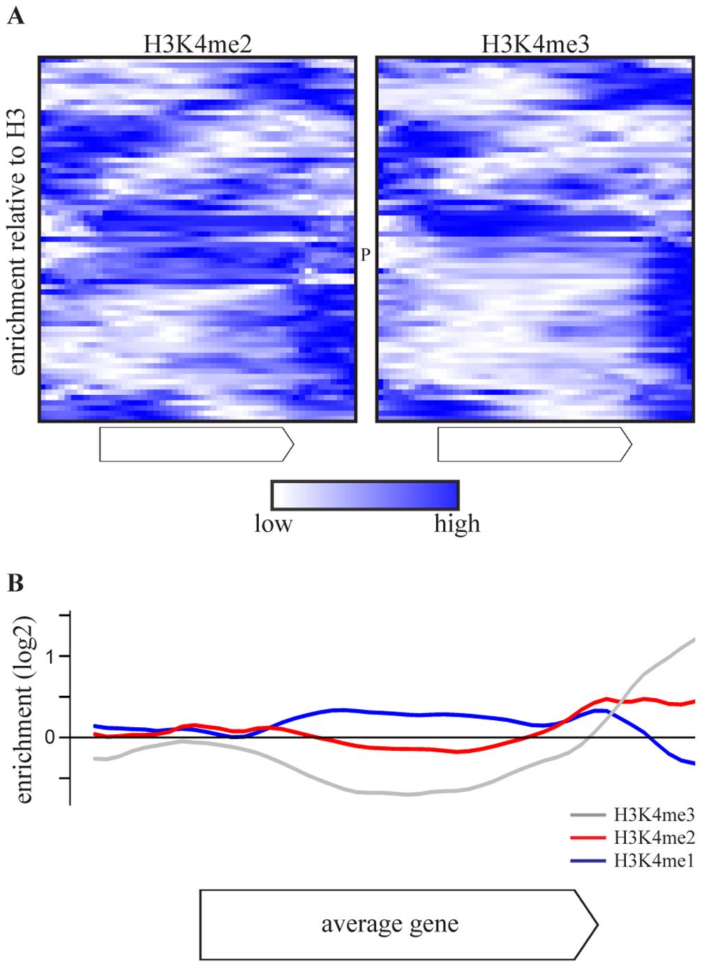 COMPASS-repressed genes have aberrant H3K4 methylation patterns, indicative of 3′-end antisense transcription.