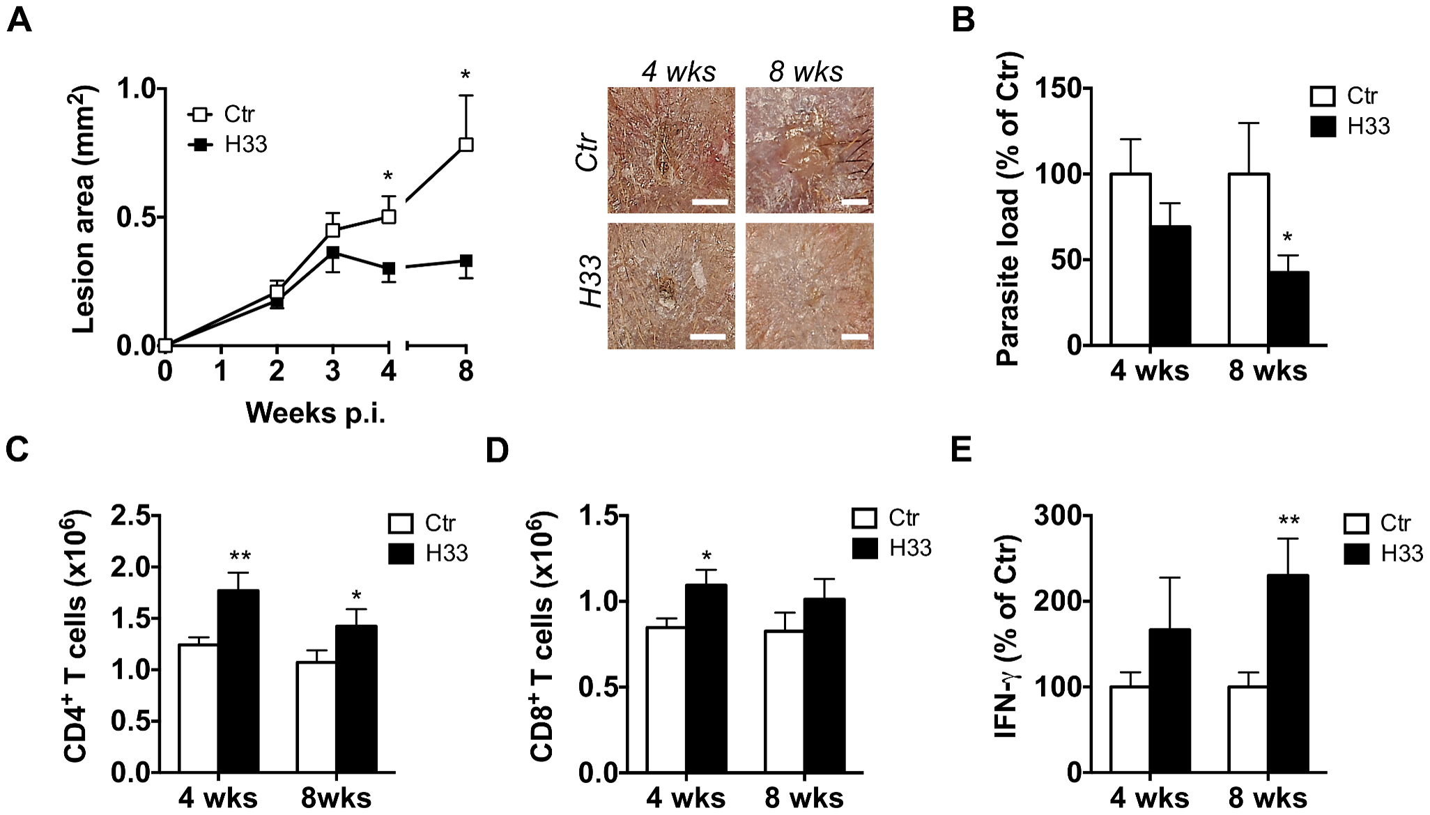 Blocking JAM-C improves the Th1 cell response and favours healing in C57BL/6 mice.