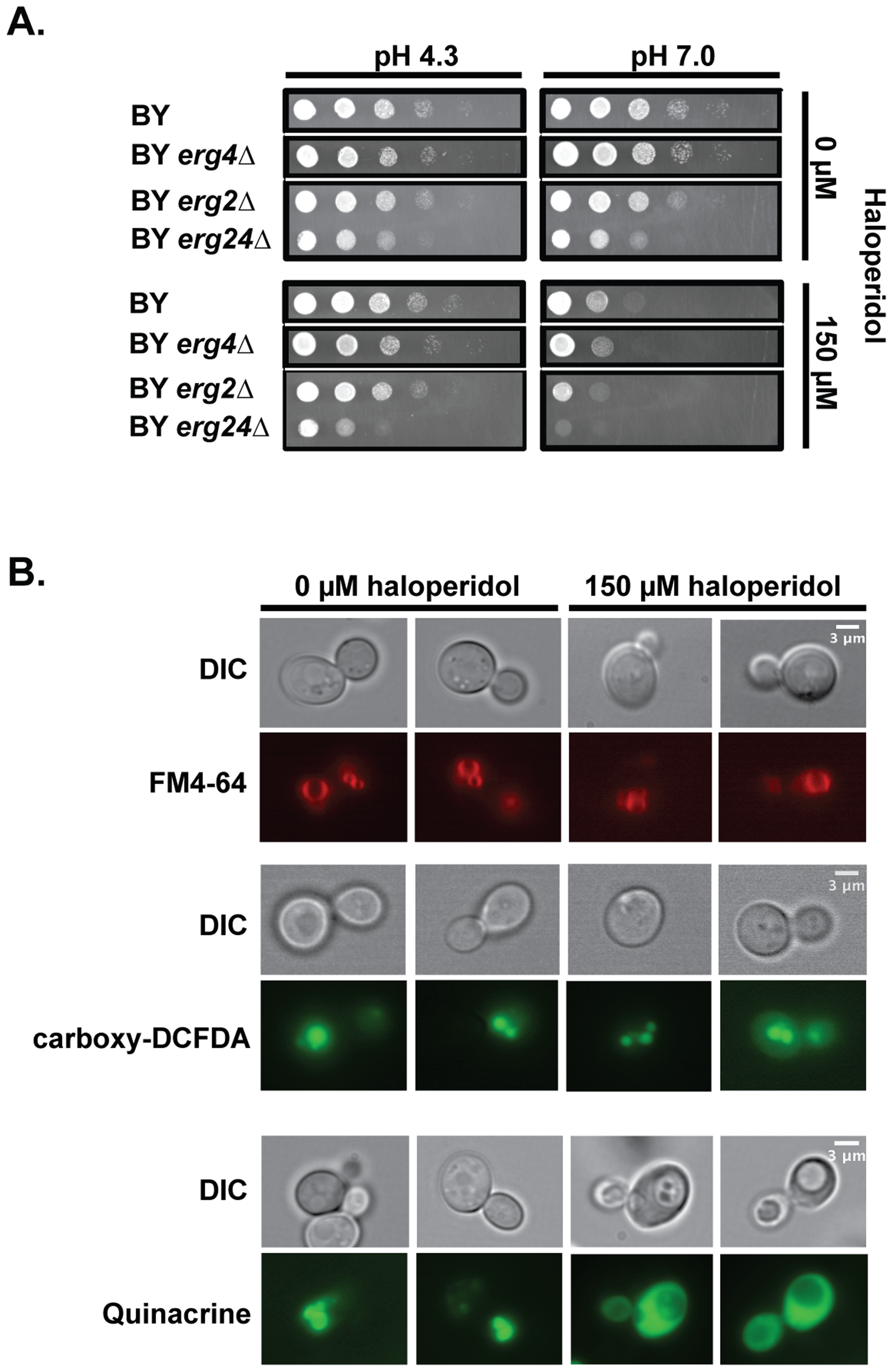 Haloperidol induces pH dependent sensitivity and other biological effects in yeast.