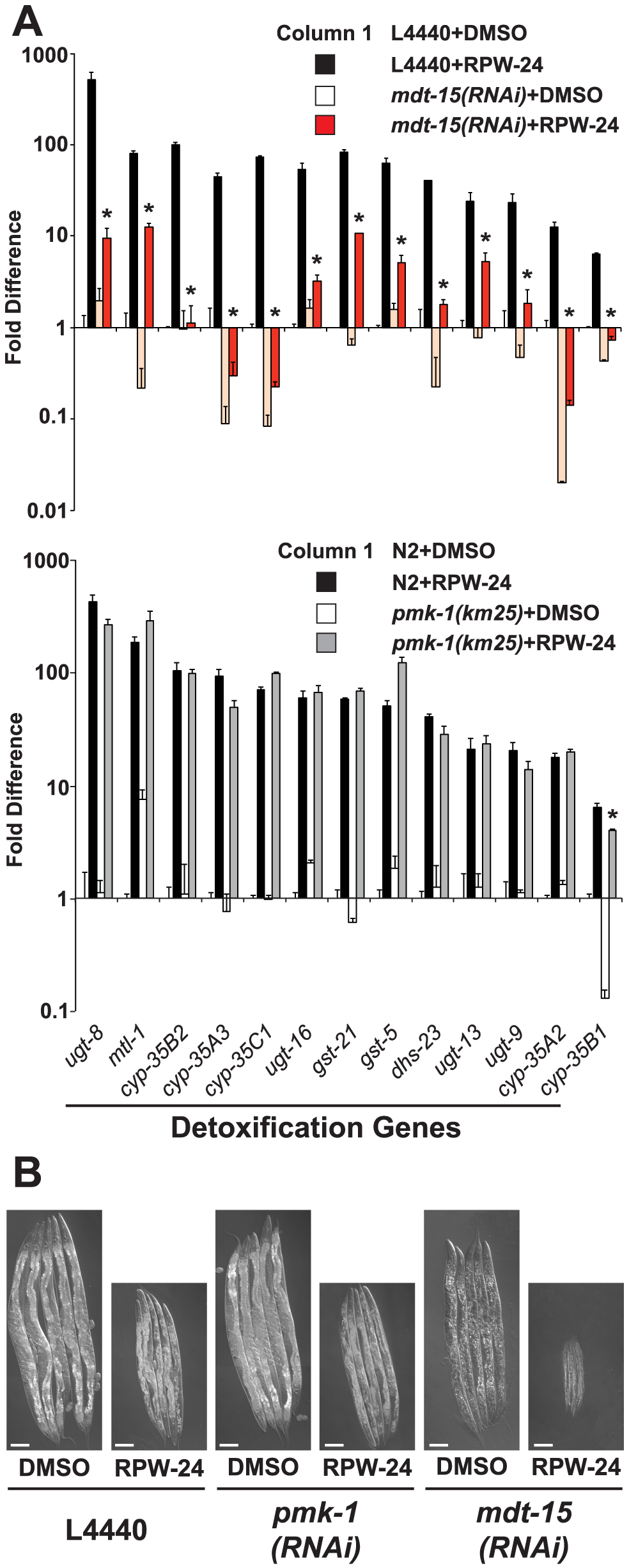 Protection from the toxic effects of the xenobiotic RPW-24 requires MDT-15, but not PMK-1.