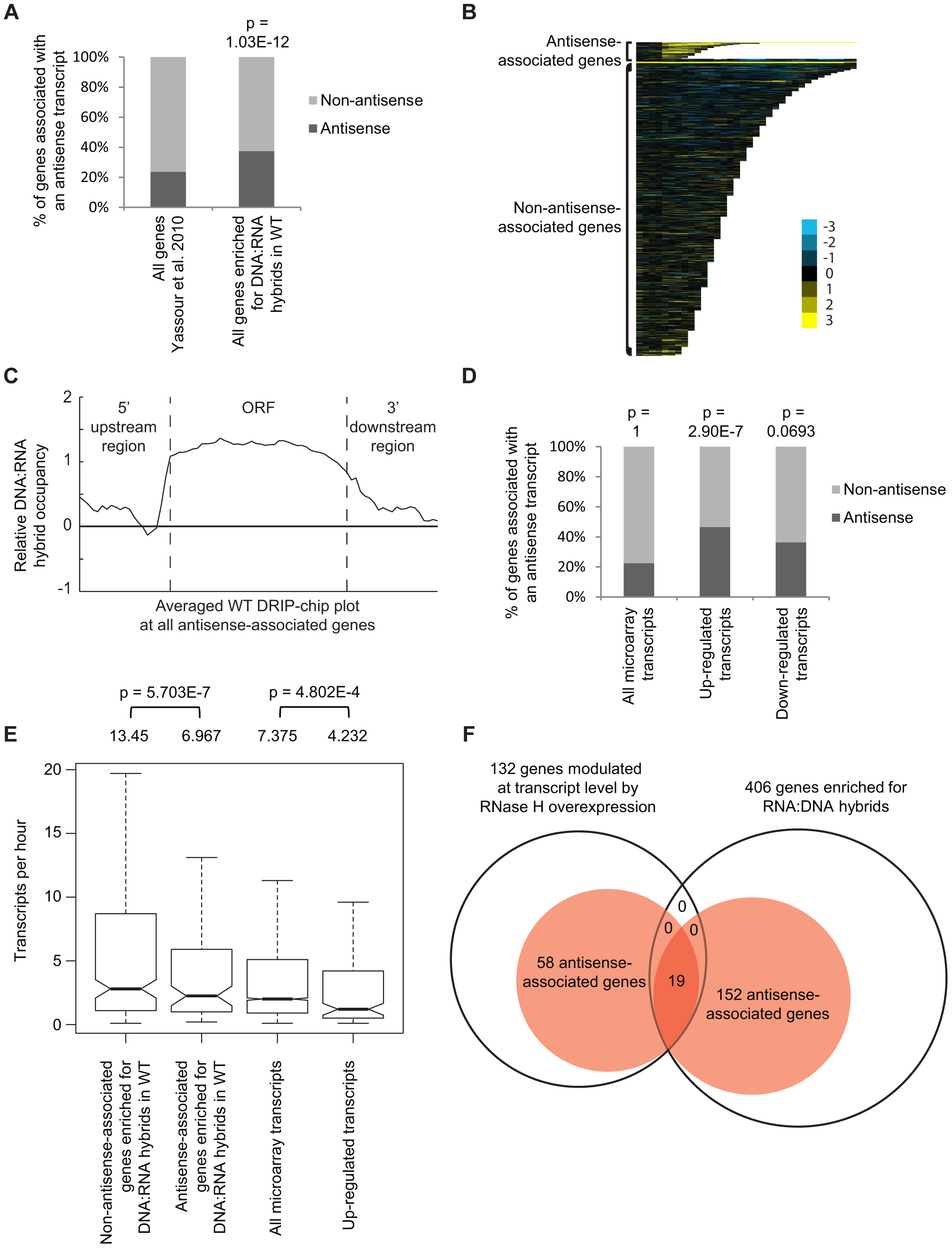 Genes associated with DNA:RNA hybrids were significantly associated with antisense transcripts.