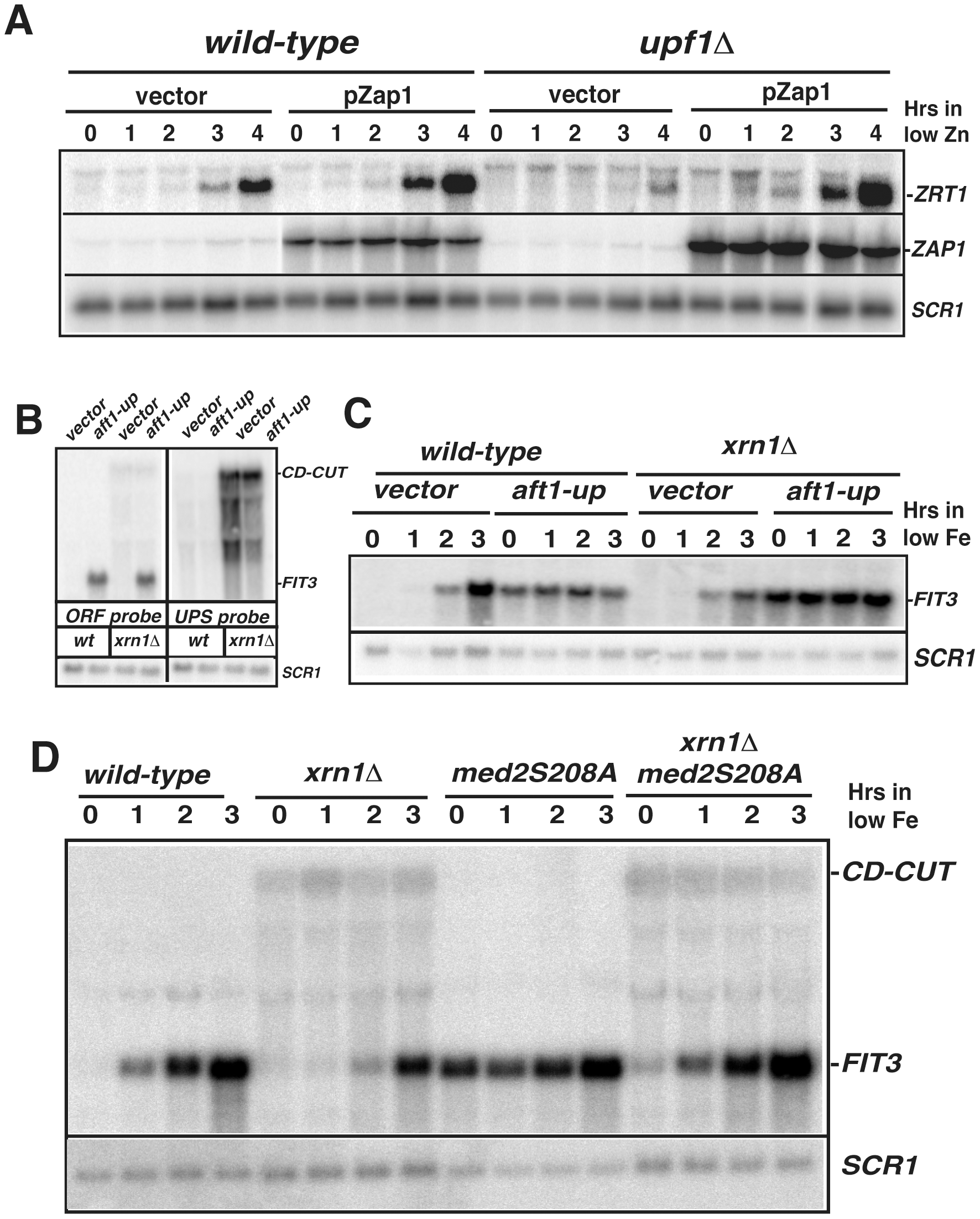 CD-CUT mediated transcriptional repression can be rescued by overexpression or constitutive activation of transcriptional activators.