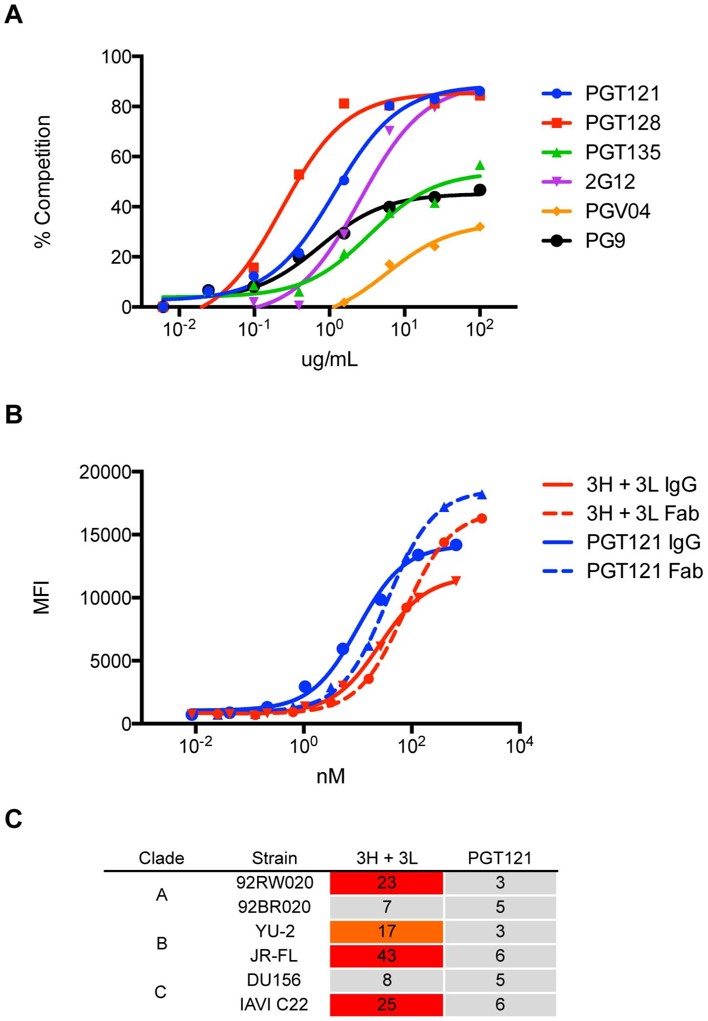 Antibody 3H+3L likely crosslinks between trimers.