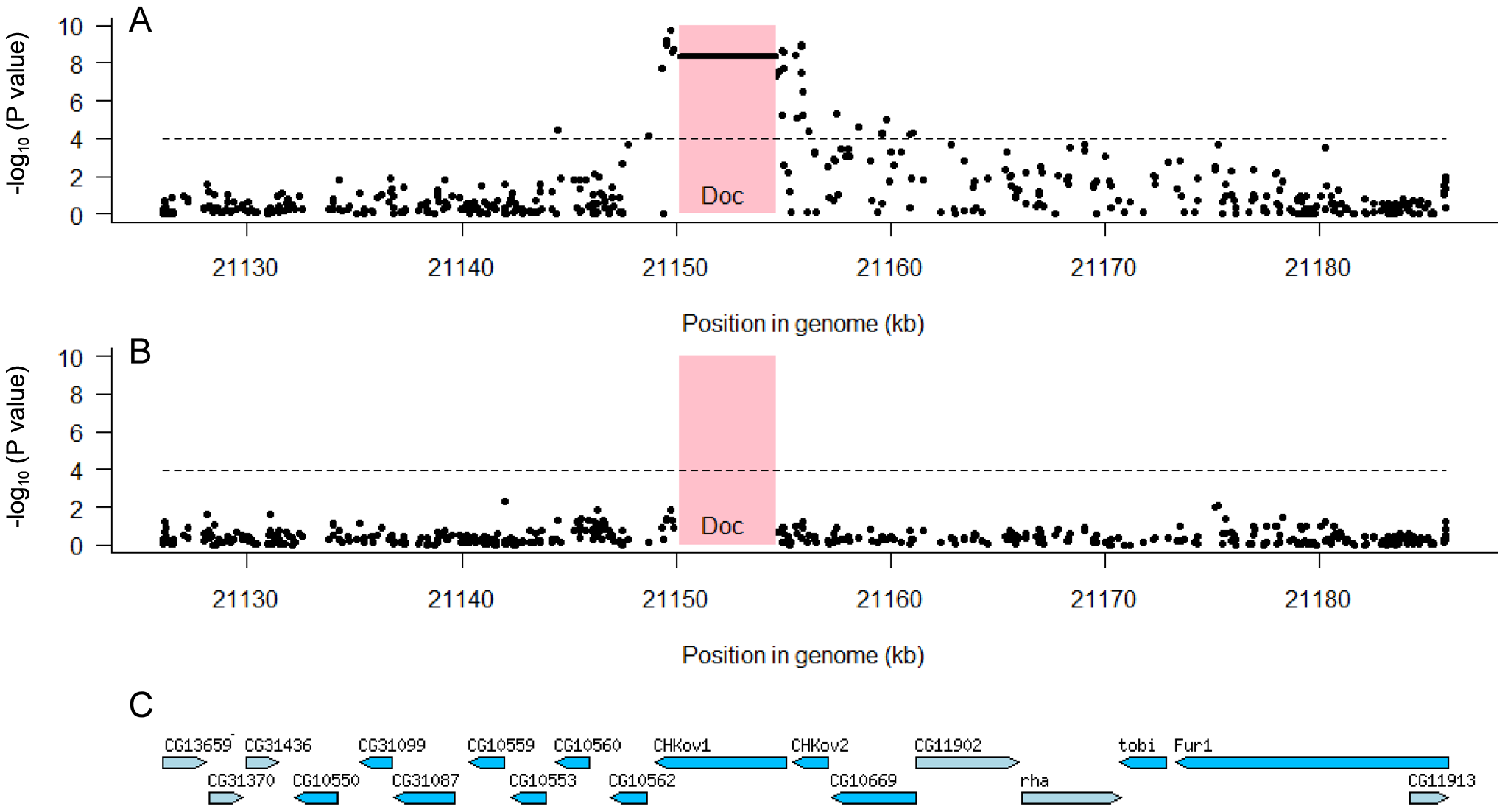 Associations between SNPs in the 60 kb region around the <i>CHKov</i> genes and resistance to the sigma virus.