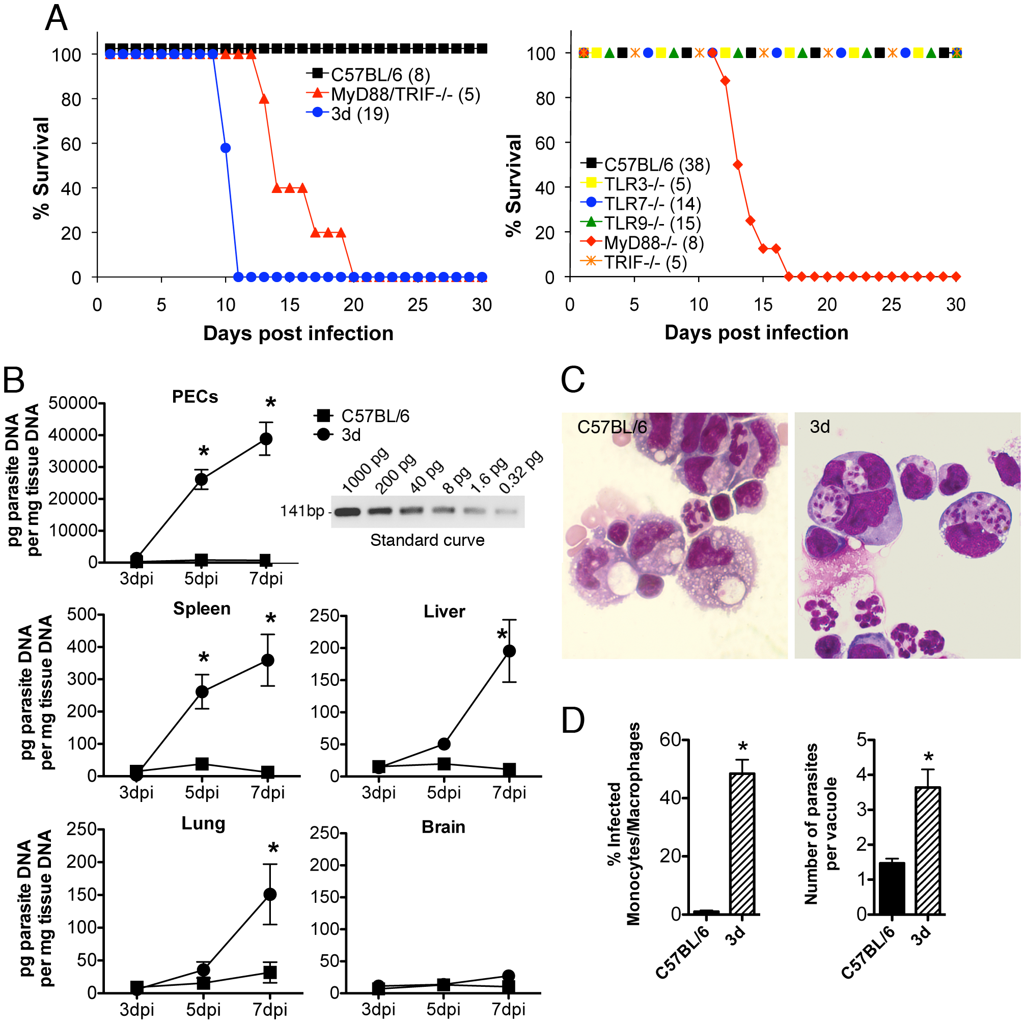 3d mice are highly susceptible to infection with <i>T. gondii</i> and succumb due to excessive parasite burden.